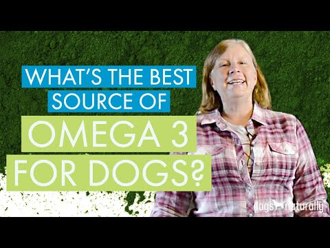 Phytoplankton | What's The Best Source Of Omega-3 For Dogs?