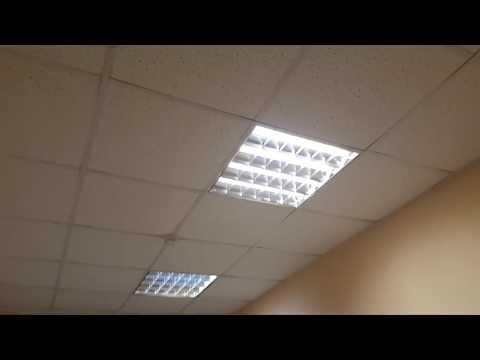 Платная палата по 1.500 руб Всеволожск ЦРБ терапия