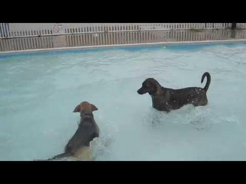 Taxi Dog Swim Day Happiness at Upshur Pool in Washington DC
