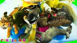 Learn Wild Animal Names and Colors For Kids with Safari Zoo Animal Toy Fun