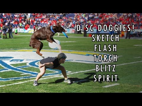 ★ AWESOME DISC DOGS ★ - The Best of The Sky High Flying Canines