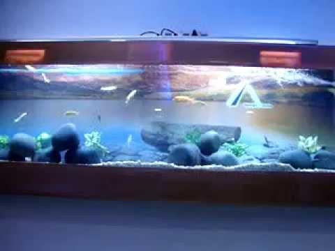 In Chennai Wall Mounted Plasma Chicled Fish Aquarium Design
