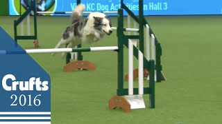 Agility  Championship  Round 1  Jumping | Crufts 2016