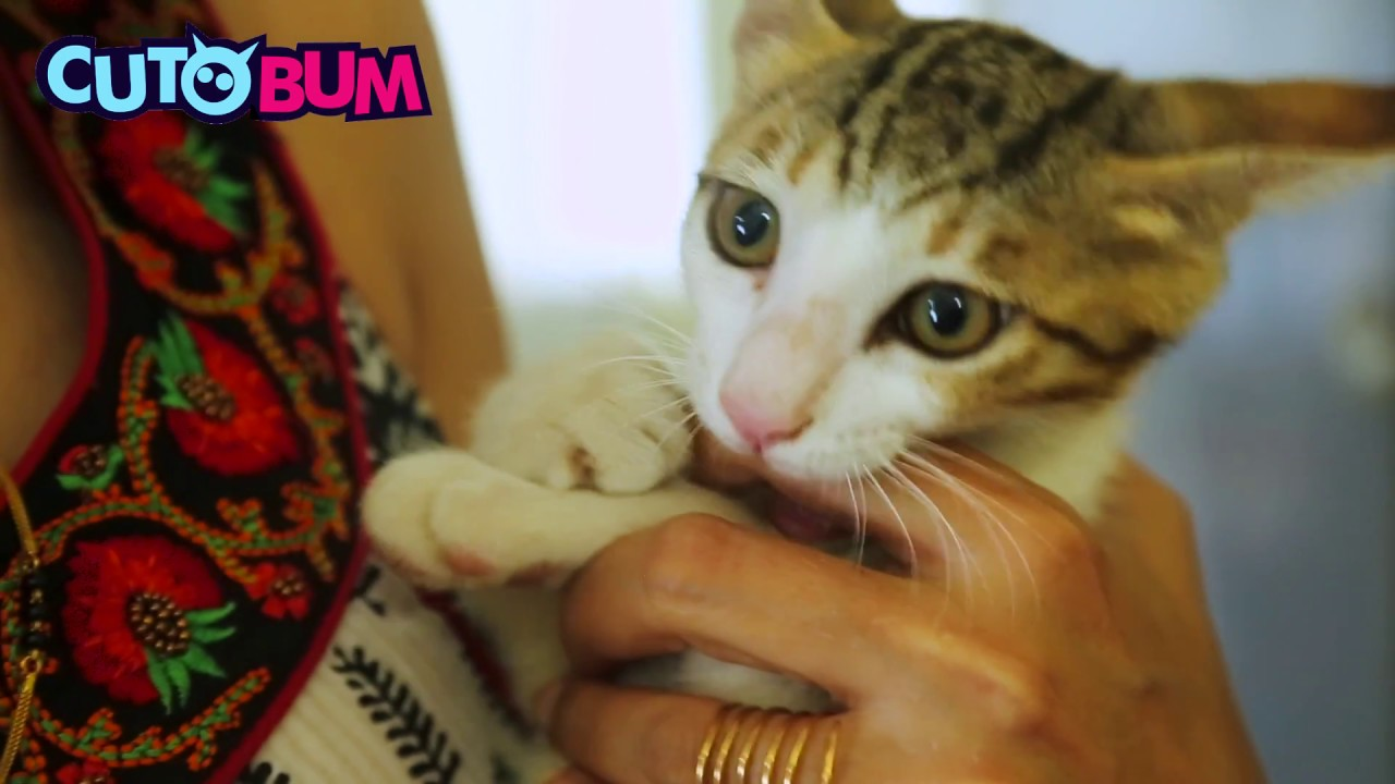 how to stop your kitten from biting and scratching you
