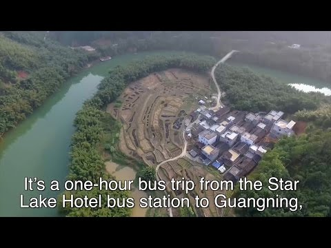 Drone & Phone: Bamboo forest in Guangdong province