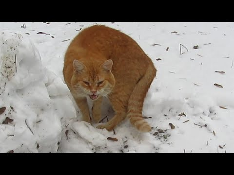 Old cat meow because very hungry