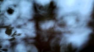 REFLECTIONS - BARBARATORIUM
