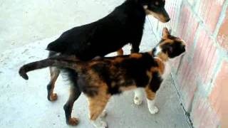 Cat and Dog Love Story - 2009