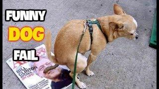 Best Funny Dog Fails June 2017 (Part 1) || Best Fails Compilation By FailADD