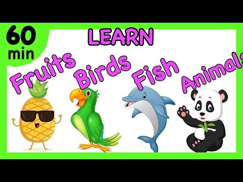Fruits, Vegetables, Birds, Color, Numbers, Sea Animals, Toys   Preschool Collection For Kids