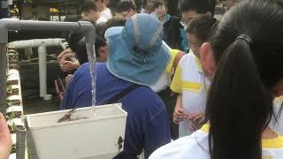Publication Date: 2020-06-11 | Video Title: 20191106粉嶺救恩書院魚菜共生系統介紹