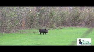 One Tough Hog! Wild Boar Hunting in Alabama with South Coast Safaris