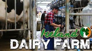 Working on a Dairy Farm in Ireland