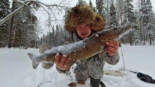 Ловим щуку на жерлицы на таёжной реке. Рыбалка на диком ручье. Живу в рыбацком балагане. Сухой паёк