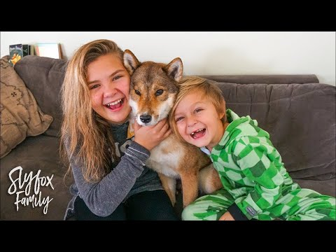 OUR NEW FAMILY DOG!! 🐶 | Slyfox Family