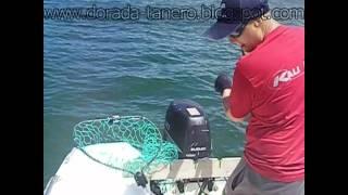 pescadoradatanero 7 ª pesca dorada peche dorade fishing orata.wmv