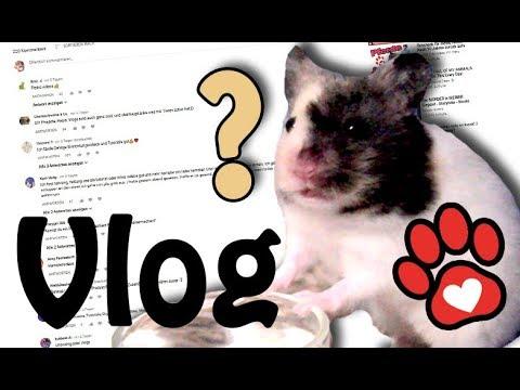 Eure Kommentare ♥ Hundetricks ♥ Paket öffnen ♥ Miyukis♥ Vlog