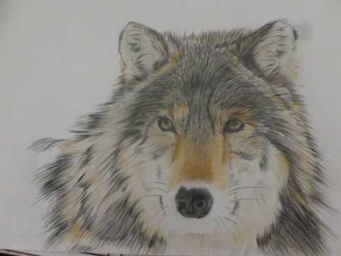 Disegno Lupo Con Matite Colorate Youtube