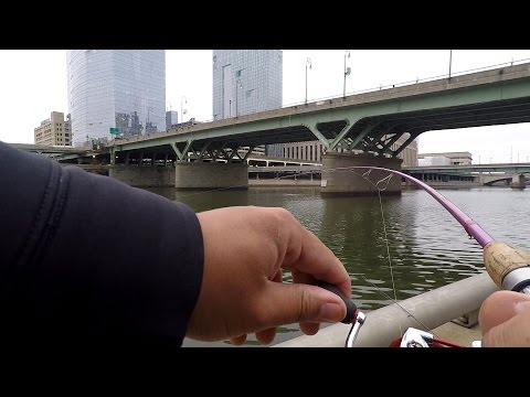 What Lurks In The Depths Of The Schuylkill River Right Now? (Philadelphia, PA)