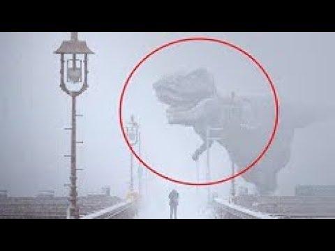 10個攝像機拍到的真實恐龍,到底真的假的?