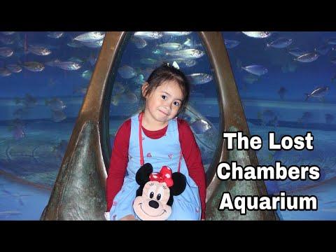 The Lost Chambers Aquarium Dubai 2019