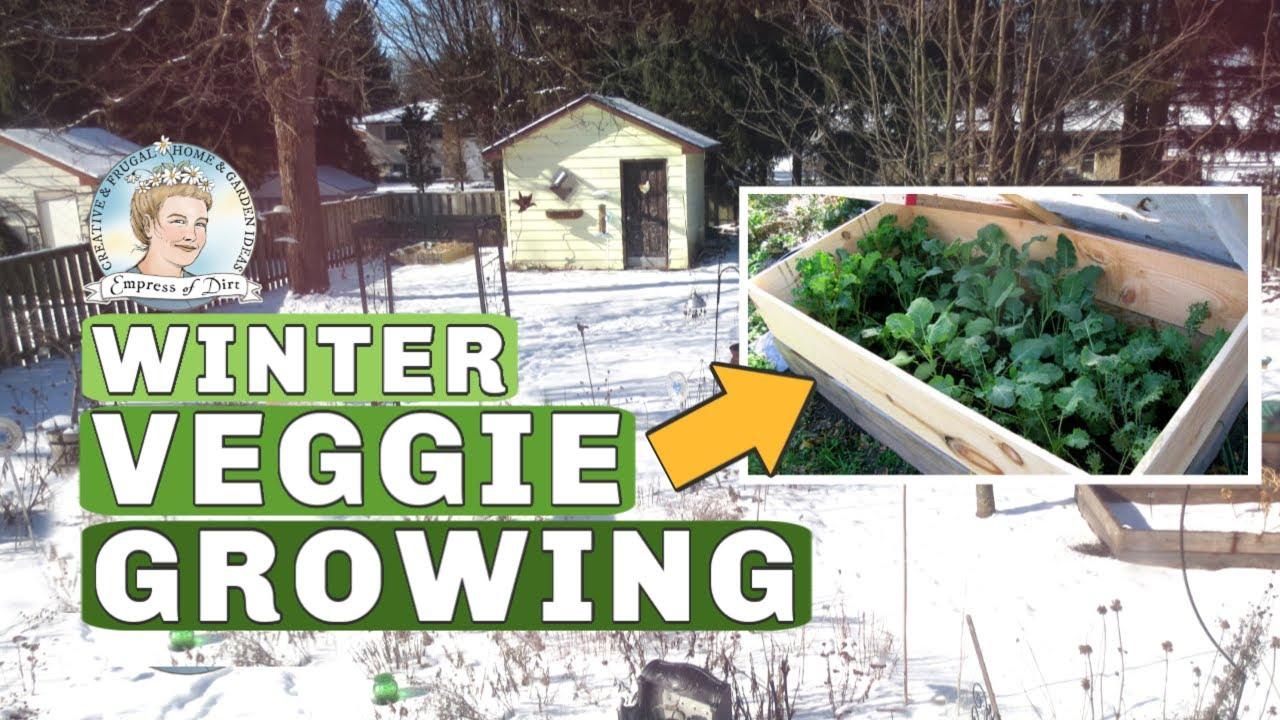 Growing Veggies In Winter - Canada - January Update