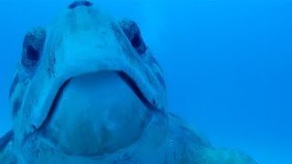 Inquisitive Turtle Attempts To Steal GoPro