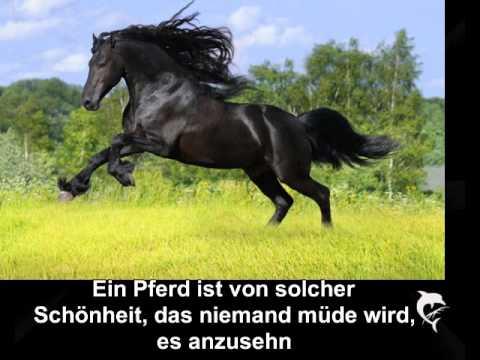pferdeliebe sprüche Sprüche Pferdeliebe | spruch zitat pferdeliebe sprüche