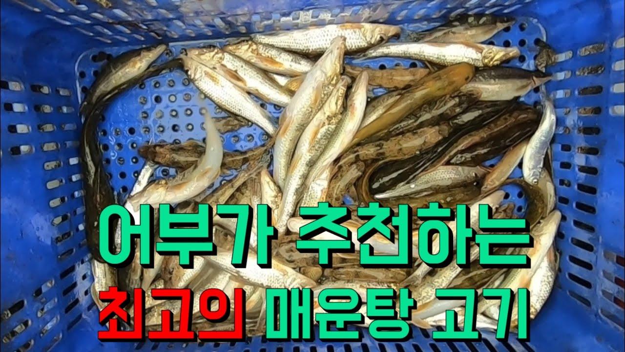 민물매운탕으로 최고인 어종은 무엇일까?