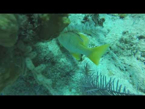 scuba video May 2016