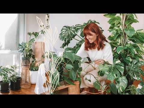 make-your-house-plants-thrive-🌿indoor-plants-care-tips-&-hacks