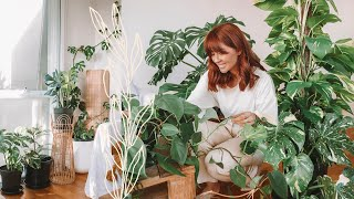 make your house plants thrive 🌿indoor plants care tips & hacks