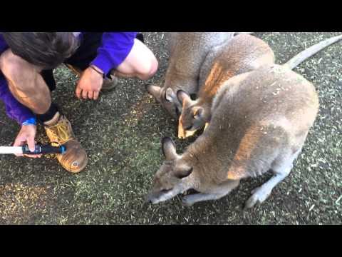 Michael Feeding Some Roos
