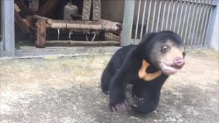 Rescued Bear Cub Has Greatest Reaction to New Playground