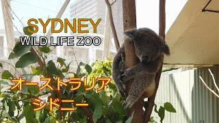 【コアラとカンガルー】オーストラリア・ シドニー・ワイルドライフ動物...