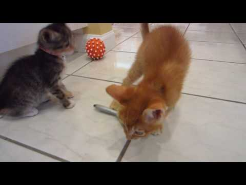 New Favorite Kitten Toy - A Pen! - Three Foster Cats Playing & Attacking A Ballpoint Pen
