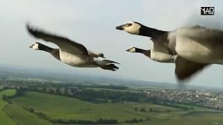 Apa yang Terjadi Jika Burung Masuk ke Mesin Pesawat ?