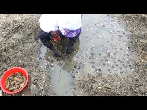 Amazing Aquaculture SeaFood Harvesting Compilation #8 - Mantis Shrimp Farm and Harvest