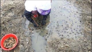 Amazing Aquaculture SeaFood Harvesting Compilation #8 - Mantis Shrimp Farm and Harvest