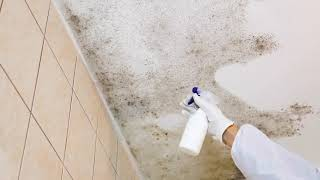 ALL US Mold Removal & Mold Remediation in Plano, TX