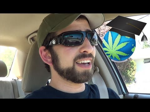 Driving While High – Cannabis Impairment Discussion