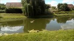 Le Plessis-Pâté : Retour au lac d'enfance dans le quartier de la Rogère