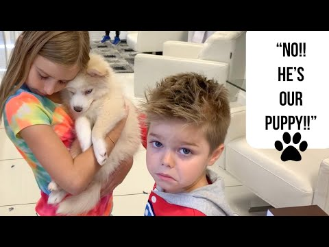 Bringing Home Pomsky Puppy!! Part 1!!