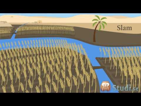 Nilens Flodkultur (Historia) - Studi.se
