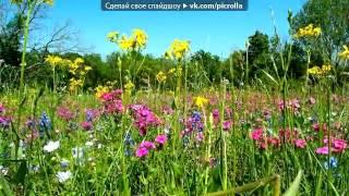 дорога цветов  - Каникулы строгого режима.