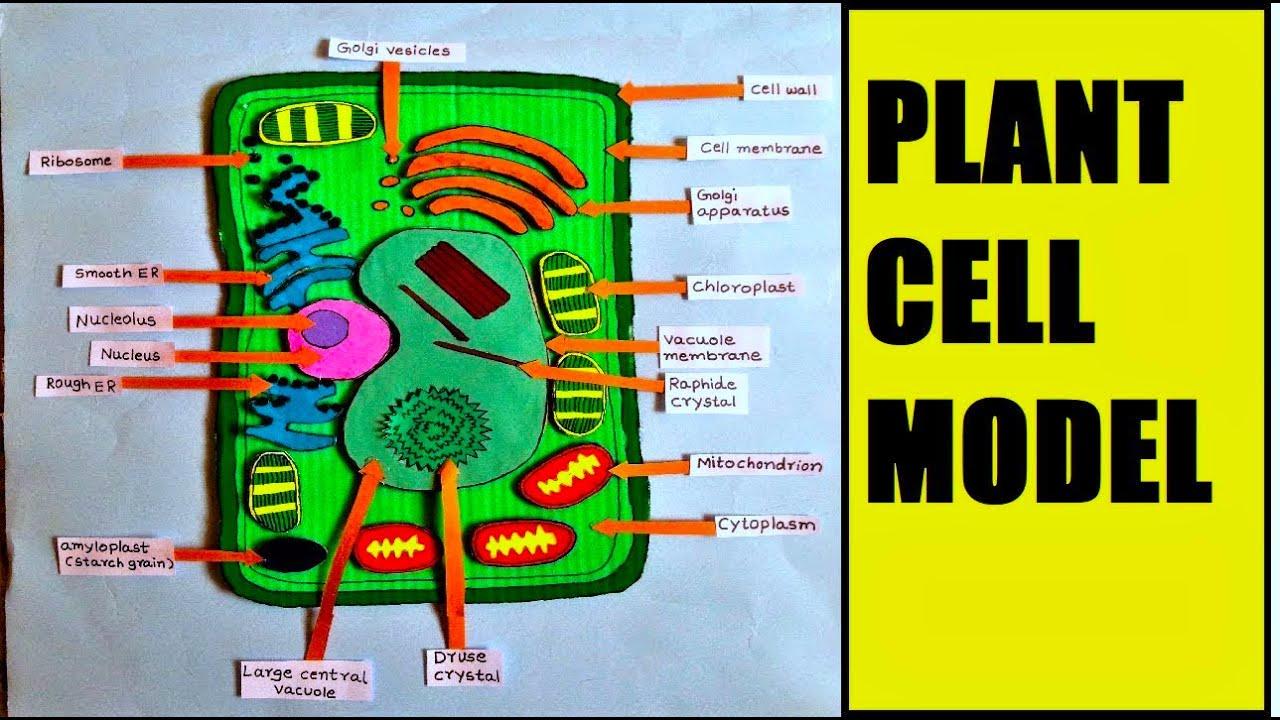 plant cell model for school science exhibition/fair | DIY ...