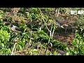 Burung Kutilang Pikat Gacor Suara Keras Pemanggil Burung Liar Langsung Jos  Mp3 - Mp4 Download