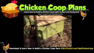 Portable Chicken Coop (small Chicken Coop Plans)