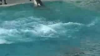 Seaworld Shamu Believe Show Part 3