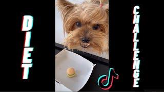 Putting A Dog On A Diet Challenge  TikTok Compilation 2020